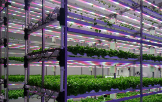 Why indoor farming?